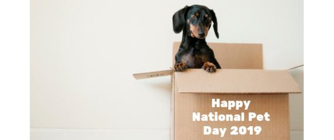 National Pet Day Deals 2019